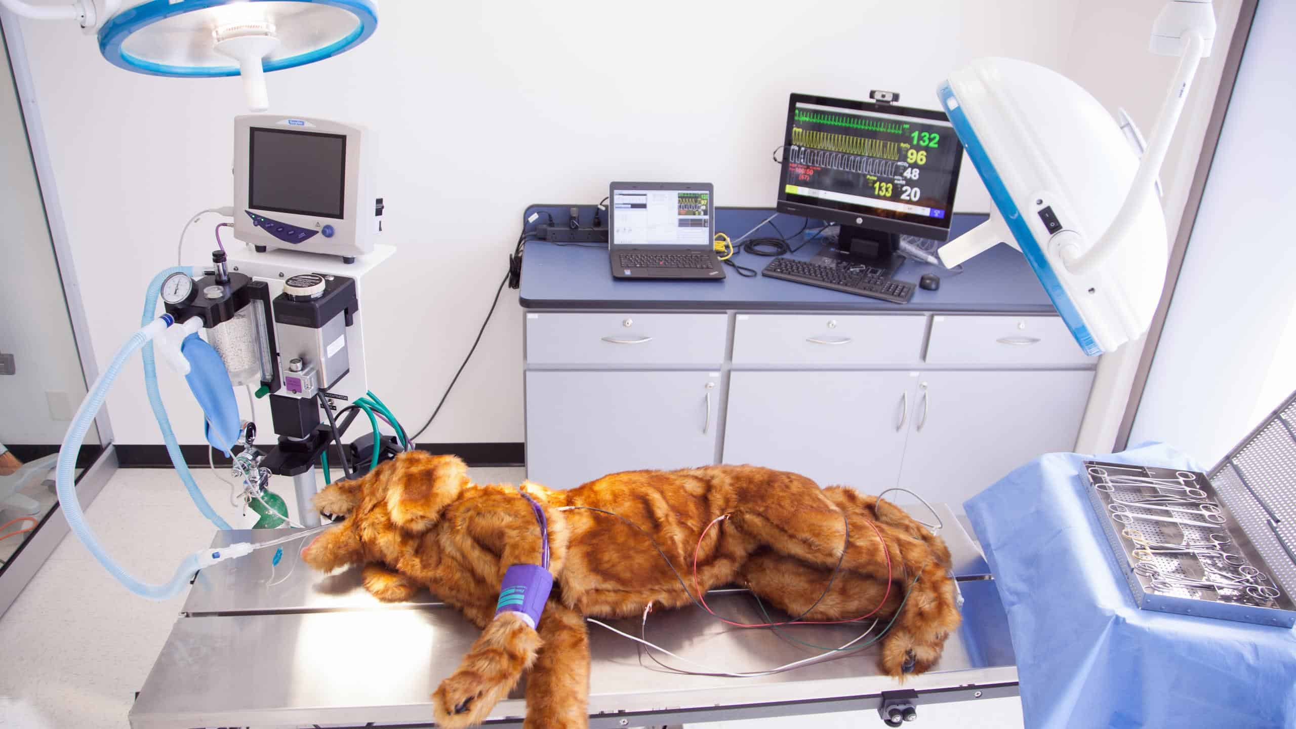 Registered veterinary technician career training rvt the worlds first high fidelity canine patient simulator for veterinary technician training gives students a hands on tool to practice cpr and monitoring xflitez Image collections