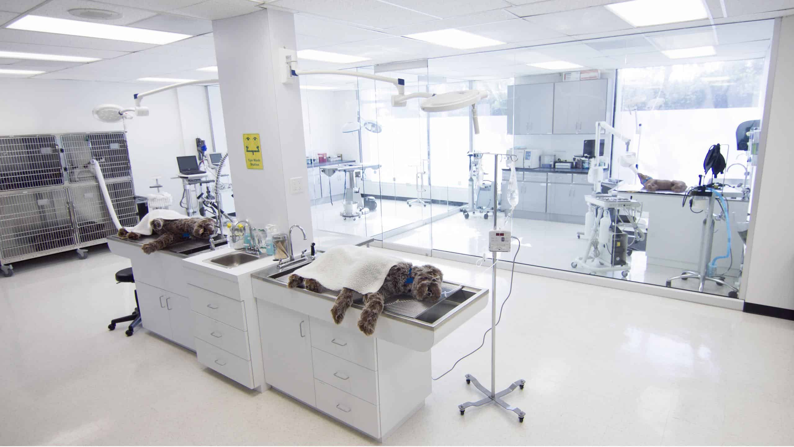 The Veterinary Technology Teaching Clinics Located On Campus Include Fully Functional Examination Surgical X Ray And Laboratory Suites Giving Students